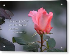 Soft Pink Rose With Scripture Acrylic Print by Linda Phelps