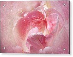 Soft Pink Tulips Acrylic Print