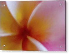 Acrylic Print featuring the photograph Soft Plumeria by Roger Mullenhour