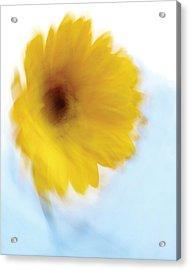 Soft Radiance Acrylic Print