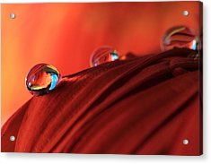 Soft Red Petals With Water Drops Acrylic Print by Angela Murdock