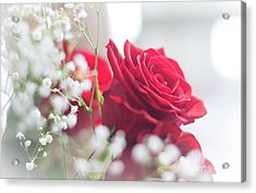 Soft, Romantic, Red Rose Acrylic Print by Cheryl Baxter