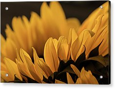 Soft Summer Light Acrylic Print