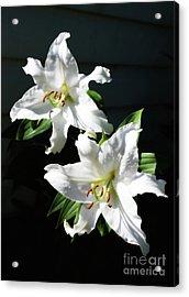 Soft White Lilies Acrylic Print