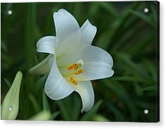 Acrylic Print featuring the photograph Soft White by Monte Stevens