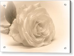 Acrylic Print featuring the photograph Soft White Rose by Scott Carruthers