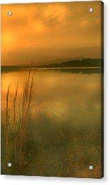 Softly Acrylic Print by Nina Fosdick