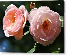 Acrylic Print featuring the photograph Softly Pink by Al Fritz