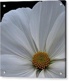 Softly White Acrylic Print by Marilynne Bull
