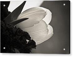 Lit Tulip Acrylic Print by Marilyn Hunt