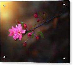 Softness Of Spring Acrylic Print by Darren  White