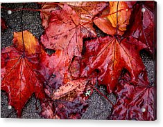 Soggy Leaves Acrylic Print by Sonja Anderson