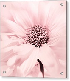 Soiree In Cotton Candy Pink Acrylic Print