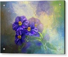 Solanum Acrylic Print by Eva Lechner