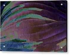 Solar Amazon Acrylic Print by Carolyn Stagger Cokley