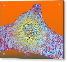 Solar Cells Acrylic Print