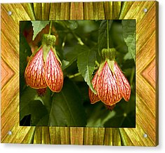 Solar Lantern Acrylic Print by Bell And Todd