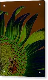 Solar Sunflower Acrylic Print by Carolyn Stagger Cokley
