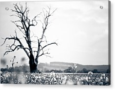 Acrylic Print featuring the photograph Solemn Oak by Justin Albrecht