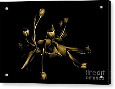 Acrylic Print featuring the photograph Solid Gold by Danica Radman