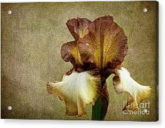 Solitaire Acrylic Print by Beve Brown-Clark Photography