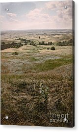Acrylic Print featuring the photograph Solitary Beauty by Sandy Adams