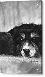 Solitary Dog Acrylic Print by Jessica Kale