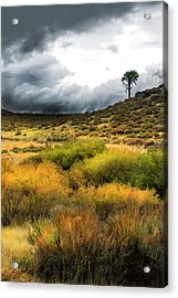 Acrylic Print featuring the photograph Solitary Pine by Frank Wilson