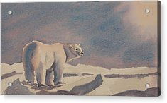 Solitary Polar Bear Acrylic Print by Debbie Homewood