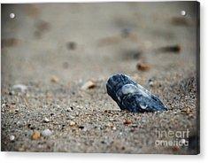 Solitary Shell Acrylic Print by Joseph Perno