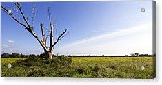 Solitary Tree Acrylic Print by Helga Novelli