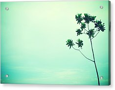 Solitary Tree Acrylic Print by Susette Lacsina