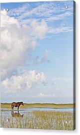 Solitary Wild Horse Acrylic Print