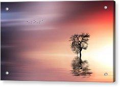 Solitude Acrylic Print by Bess Hamiti