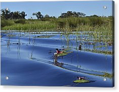 Solitude In The Okavango Acrylic Print
