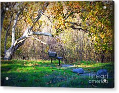 Solitude Under The Sycamore Acrylic Print by Carol Groenen