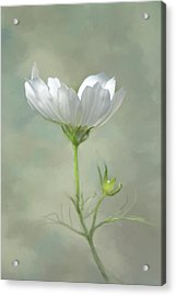 Acrylic Print featuring the photograph Solo Cosmo by Ann Bridges