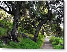 Solstice Canyon Live Oak Trail Acrylic Print by Kyle Hanson