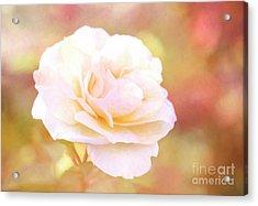 Solstice Rose Acrylic Print