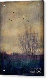 Somber Acrylic Print