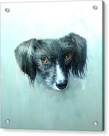 Someones Pet Acrylic Print