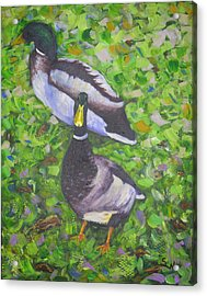 Somerset Ducks Acrylic Print