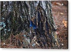 Something Blue Acrylic Print by Jonathan Ellis Keys
