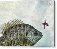 Something Fishy Acrylic Print by Mark Fuller