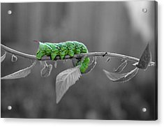 Something Green Acrylic Print