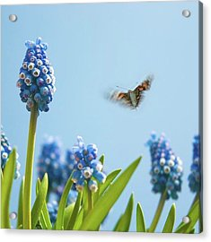 Something In The Air: Peacock Acrylic Print