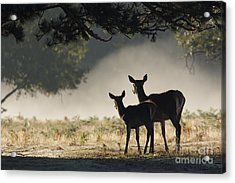 Something In The Mist Acrylic Print