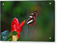 Acrylic Print featuring the photograph Something Red by Teresa Blanton