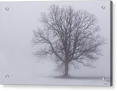 Sometime We Need The Fog Acrylic Print by Skip Tribby