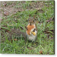 Sometimes I Feel Like A Nut Acrylic Print by Debbie May